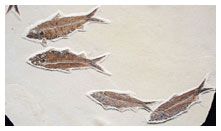 Fossil Fish Plate
