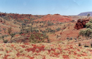 Spinifex waiting to strike.